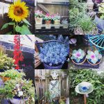 A montage of flowers and plants in village gardens.