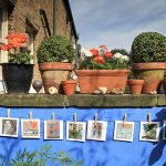 Open Gardens and Pop Up Shops around the village